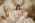 Sinnliche Schwangerschaftfotos in Boho Fotostudio Munchen